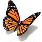 PageLines-ButterflyMobileImage.jpg